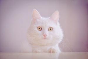 Gatito muy tierno - Cute cat